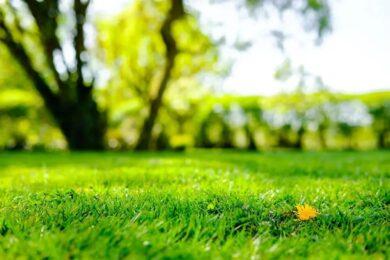 Prendre soin de votre pelouse
